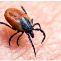 Riesgos de la enfermedad de Lyme